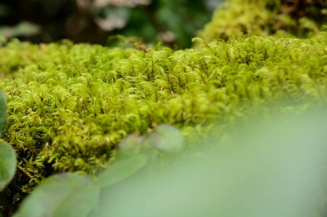 Moss thrives in the rainforesty first part of the trail.