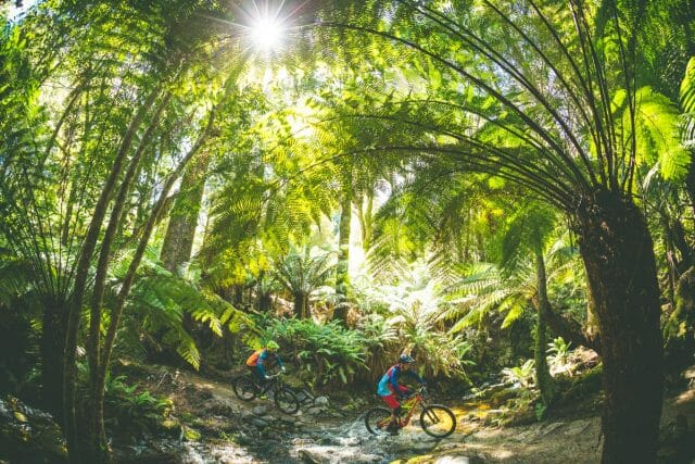 Across this incredibly lush and fresh creek crossing, park your bikes and sit to soak in the surrounds.