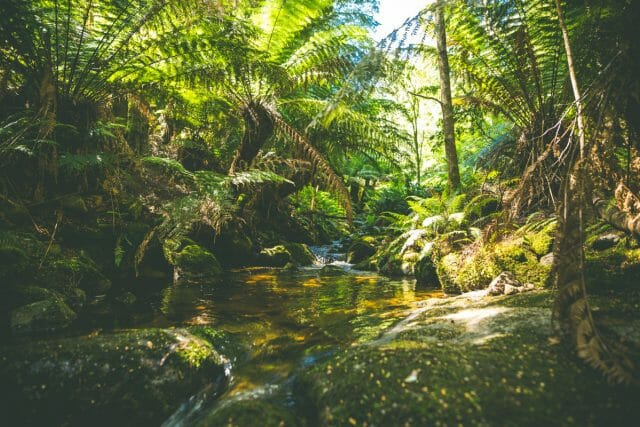 Like some forest dream, the waters are so clear and the vegetation is vibrant and dense.