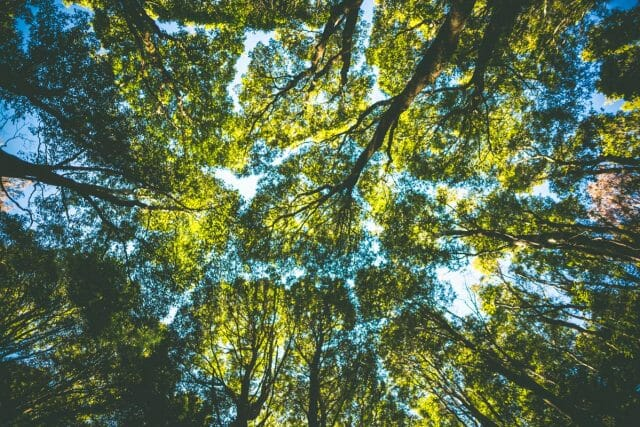 The thick canopy locks together above you to lock in the moisture of the forest.