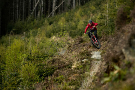 A rider jumps on the edge of the forest