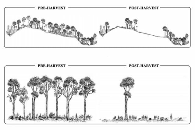 Forestry Diagrams