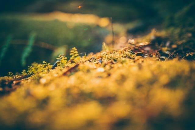 moss and ground cover